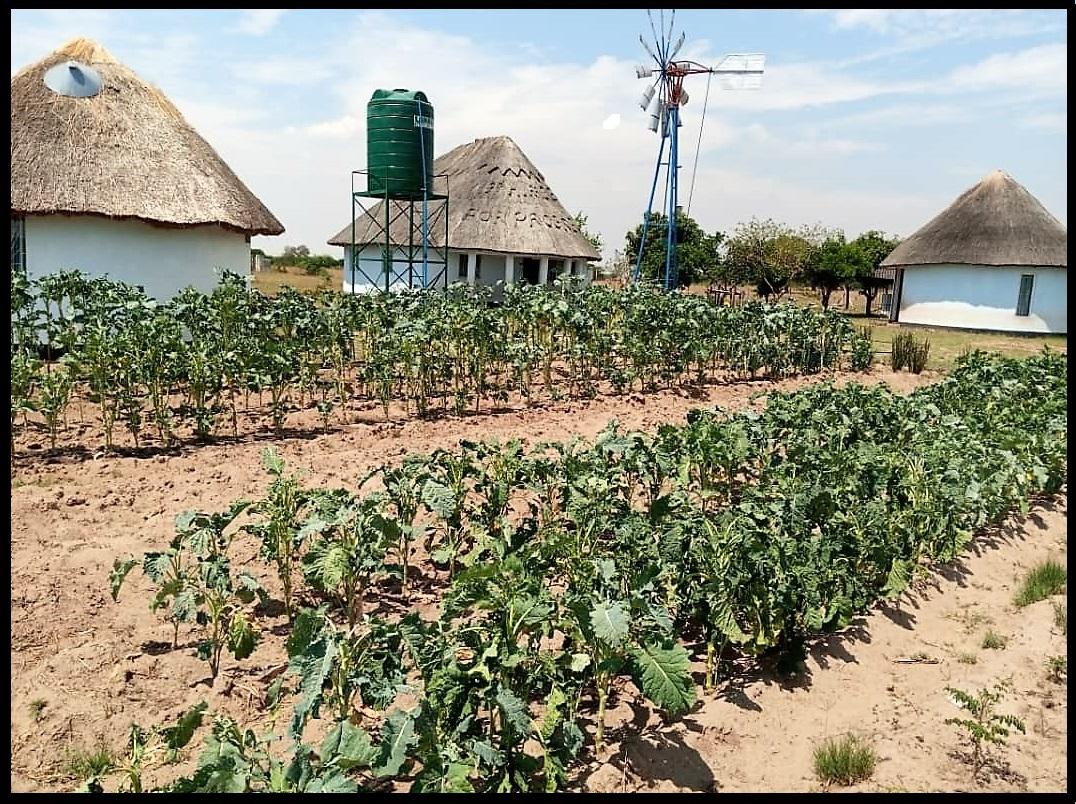 Nhimbe Community Center Garden!